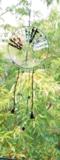 Tree of Life, regenboog van natuursteen