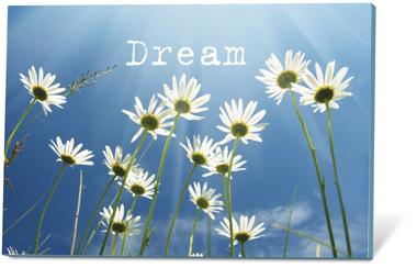 Dream, zaden en een kaartje