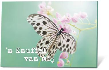 'n Knuffel van mij (zaden en een kaartje)
