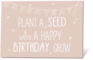 Zaadjes, plant a seed & watch a happy birthday grow